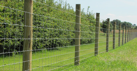 Sheep Essex Field Fencingessex Field Fencing